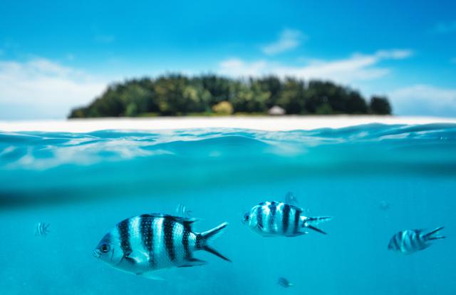 Snorkling On Zanzibar Island