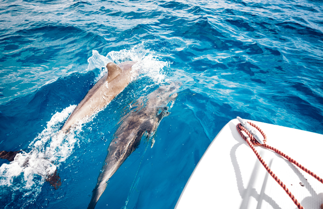dolphins in Zanzibar
