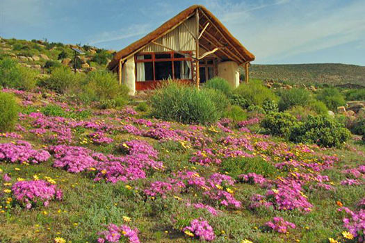 The South African Flower Route: Oudrif. Photo by oudrif.co.za